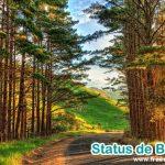 Status de Boa tarde